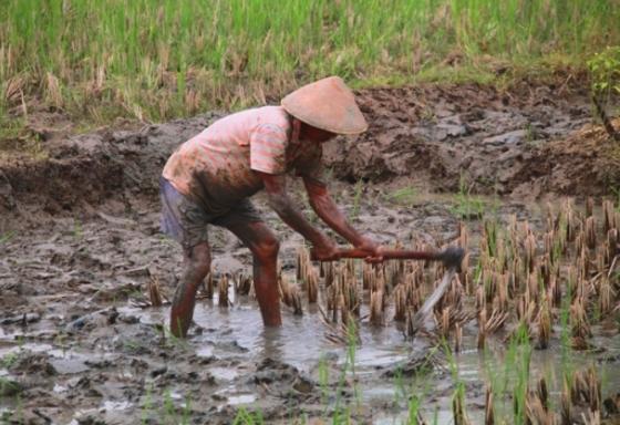 petani-mencangkul-industri-foto-agungpuma-670